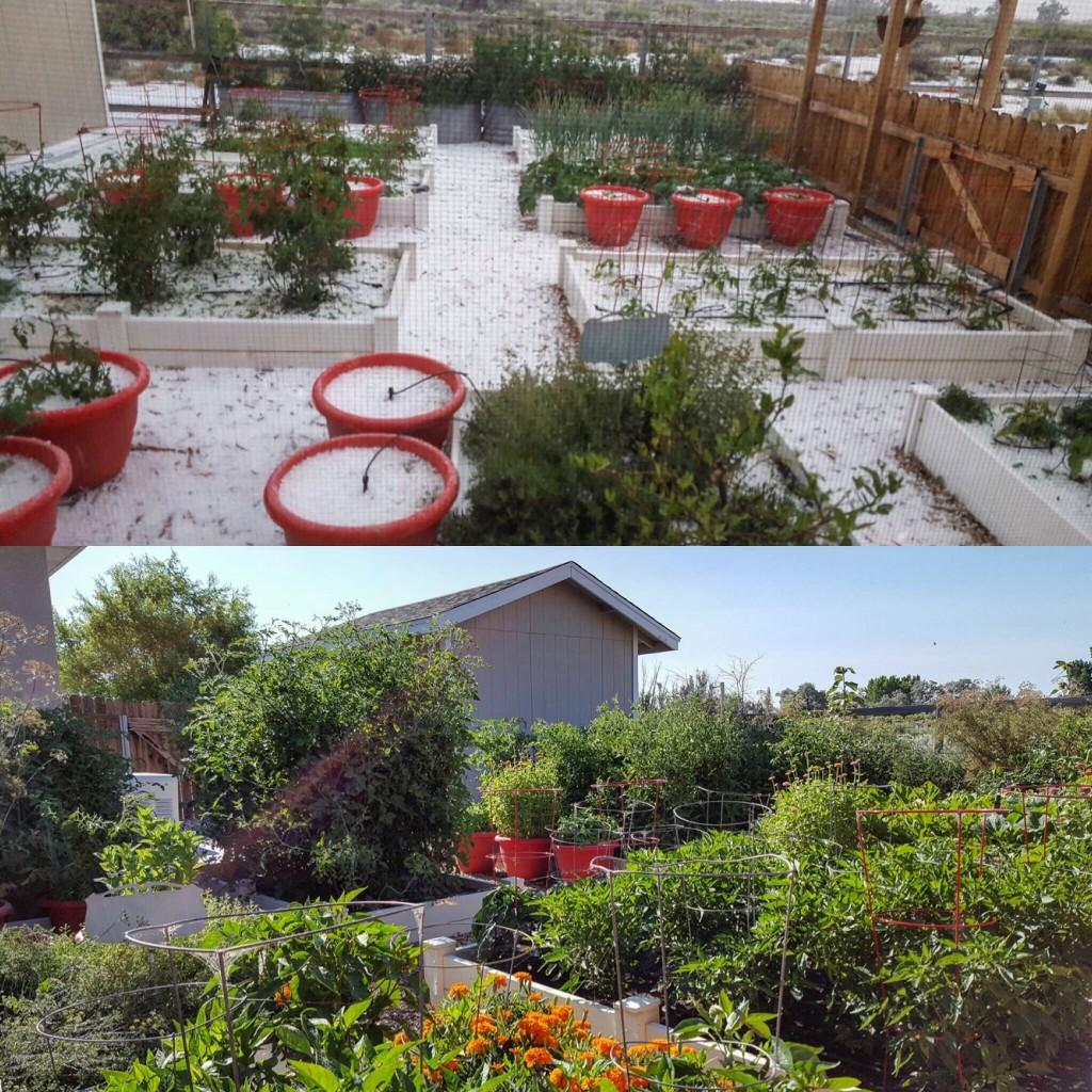 KICK-and-BOOST-Garden-2017-With-Snow-In-June