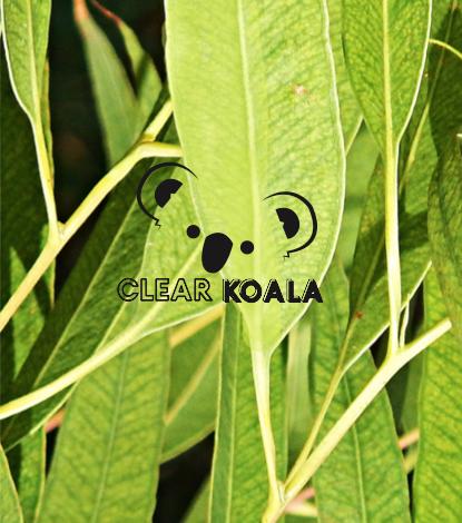clear-koala-3